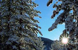 Tree-Snow-tahoe270x173